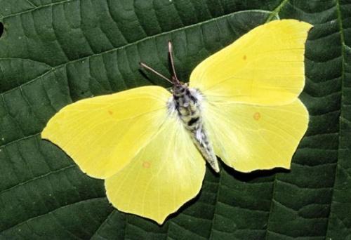 Pg-19-butterfly-ala_163211s[1]